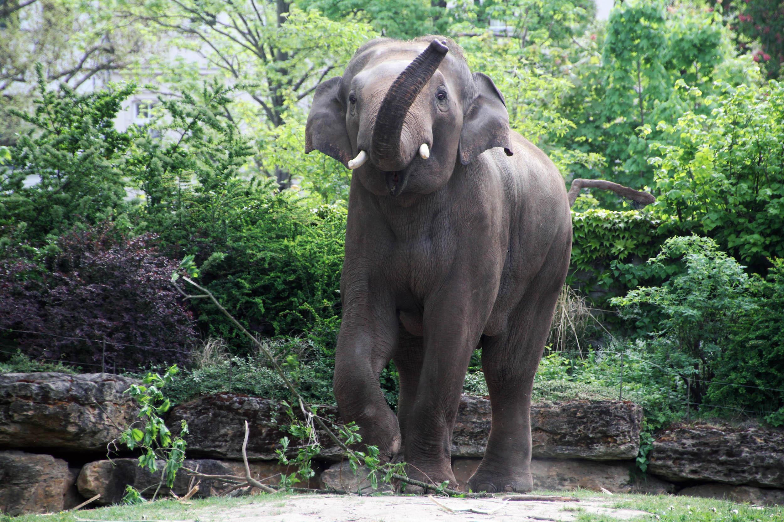 40 Voi Nam unterstützt den Artenschutz © Zoo Leipzig