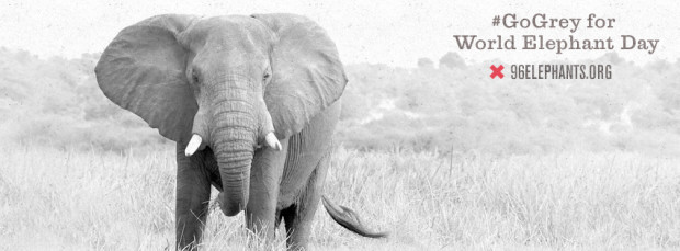 96 elephants event photo