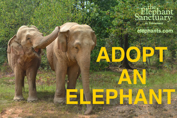 Adopt-an-ele_sign-0070-web2