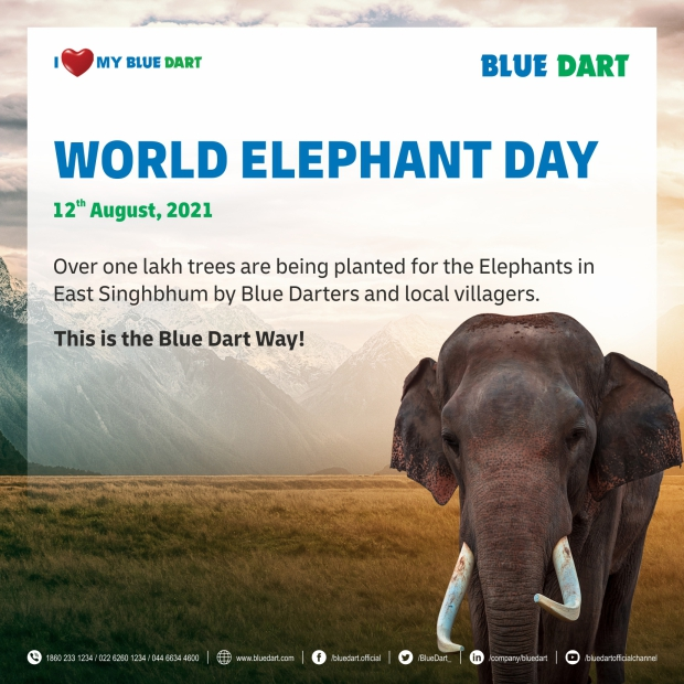 BD_World Elephant Day_EDM 1