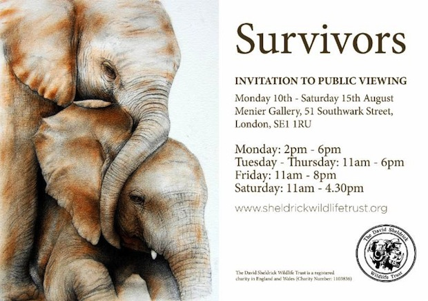 DSWT Survivors exhibit London