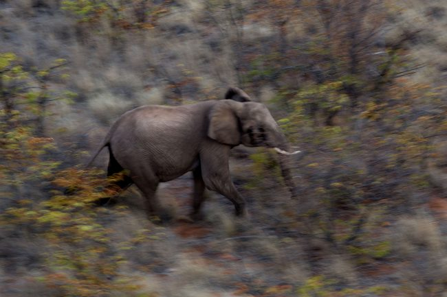 23 July 2018. Elephant Relocation from Venetia Limpopo Nature Reserve (South Africa) to Zinave Reserve (Mozambique). Picture: JAMES OATWAY