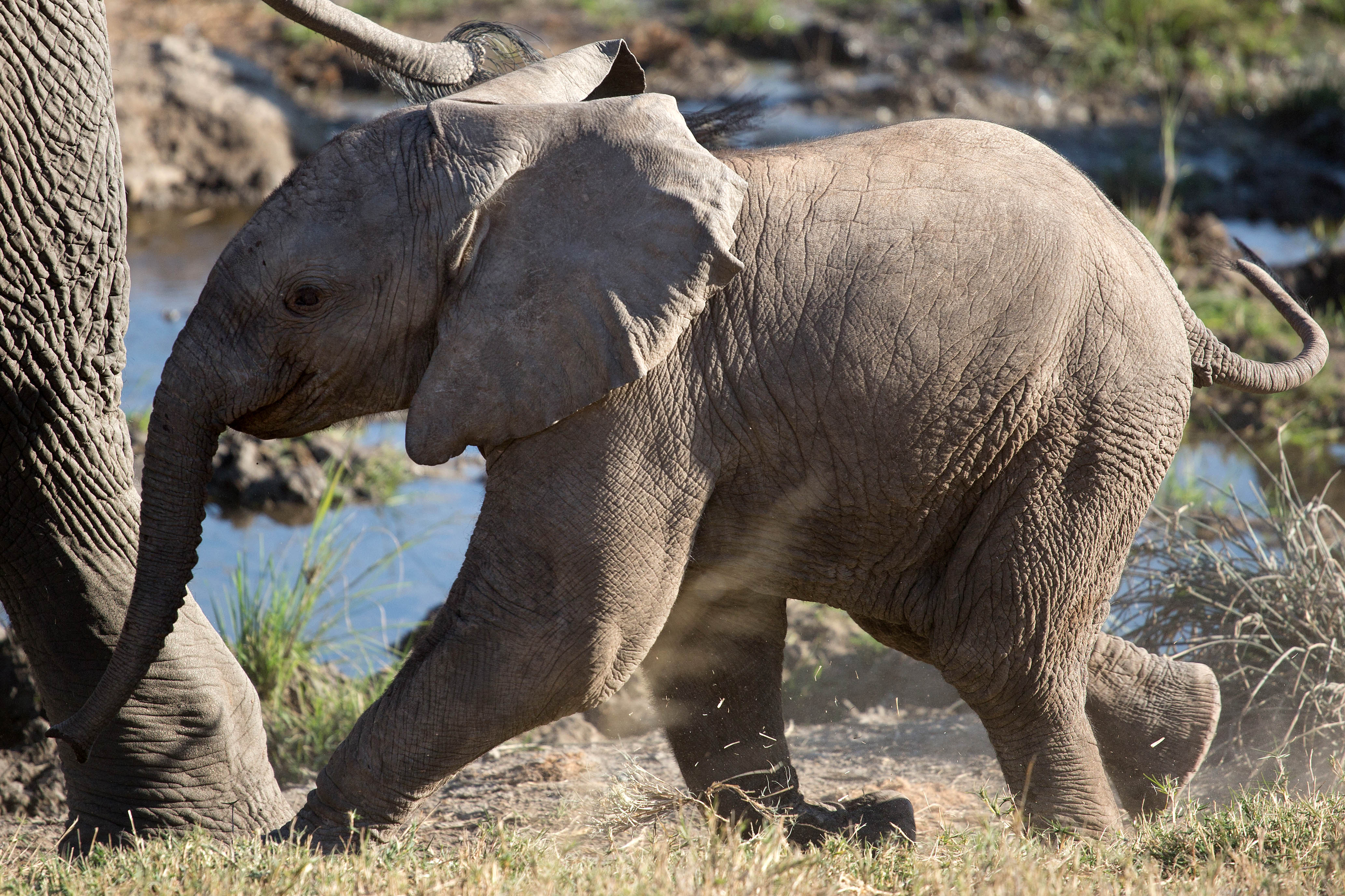 30 July 2018. Elephant Relocation from Venetia Limpopo Nature Reserve (South Africa) to Zinave Reserve (Mozambique). Picture: JAMES OATWAY