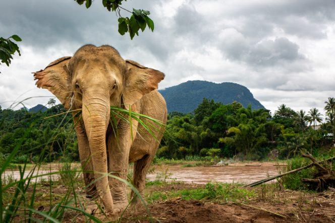 Elephan.asian donation
