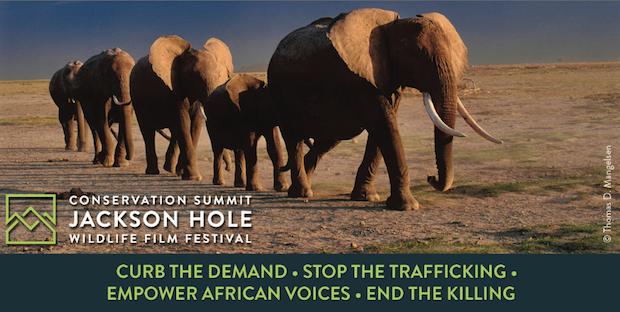 Elephant Summit event