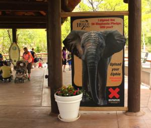 ElephantDayPhoto-300x255