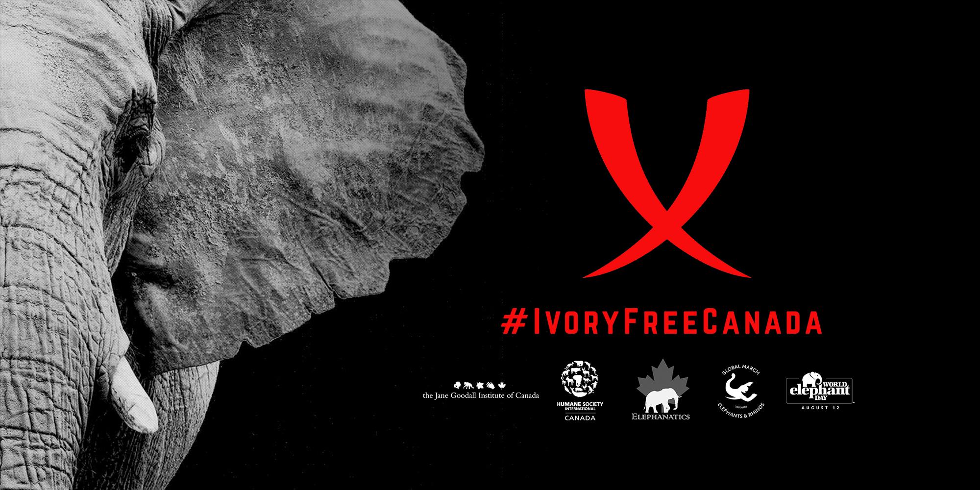 IvoryFreeCanada-SM-Facebook-Header1