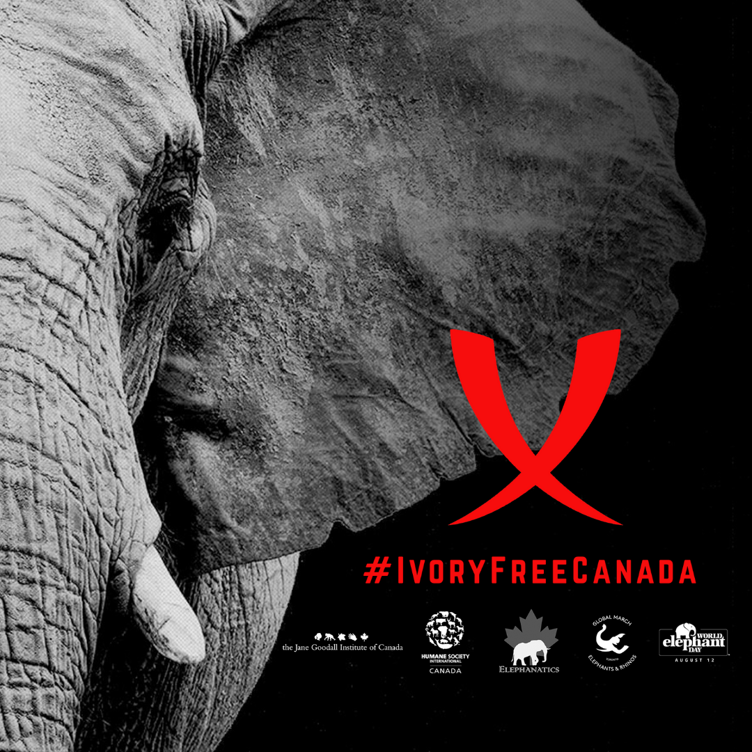 The Ivory Free Canada Coalition logo
