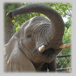 Lee Richardson Zoo event
