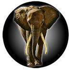 March for Elephants (San Francisco) logo