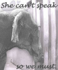 Save Queenie Save Elephants logo