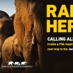 Rally the Herd PSA