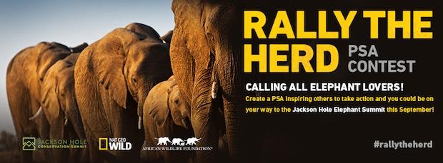 Rally the Herd PSA