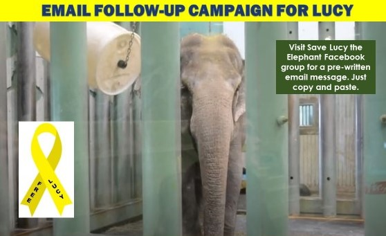 WED Email Campaign