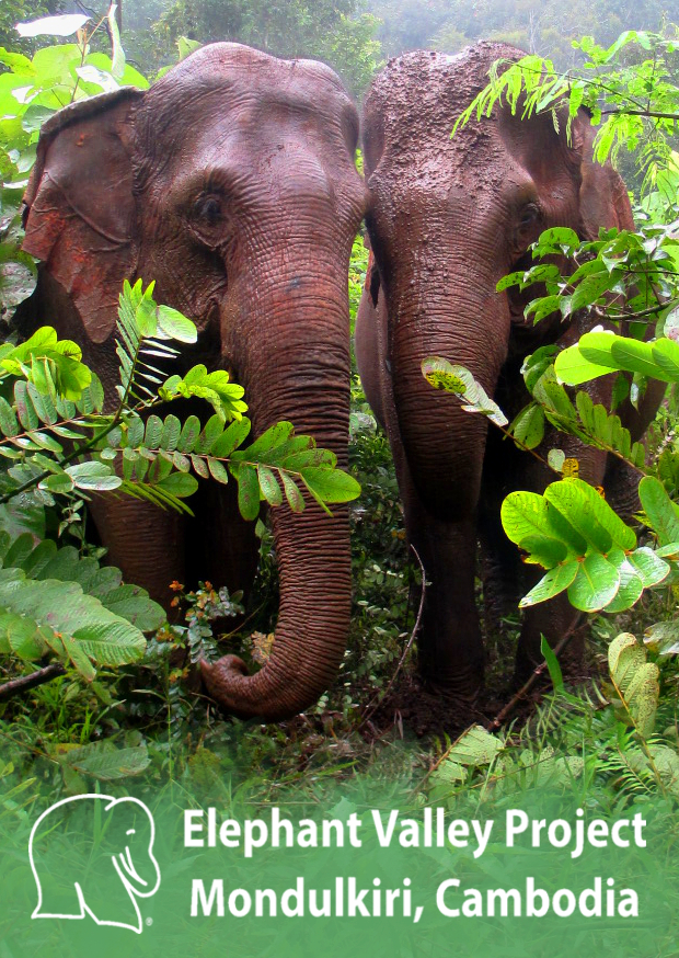 World Elephant Day Pic