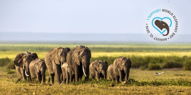 elephant-day-2-768x384