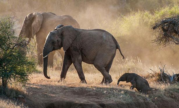 elephant_gallery_1 2