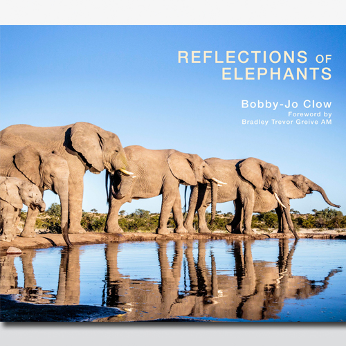 reflections-of-elephants-1464328593