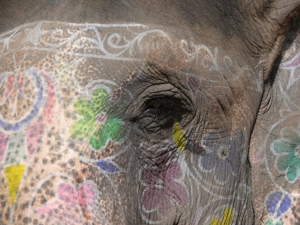rsz_paintedelephantcloseup