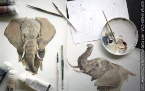 ssh - elephants 2_res