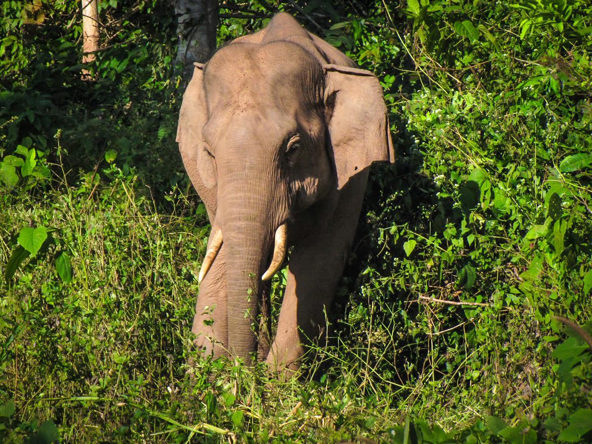 World Elephant Day  World Elephant ...