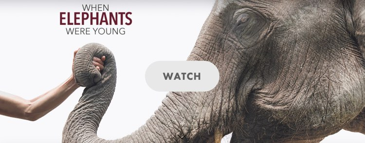 watch when elephants were young