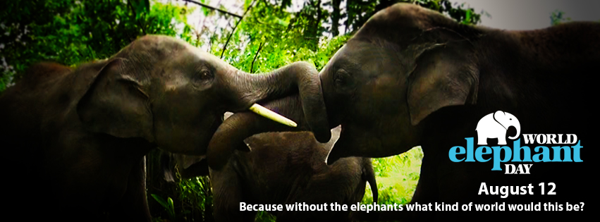 22f6fedf79f9 Share about World Elephant Day on your Facebook page by downloading one of  our special cover photos.