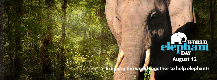 a9d6ea6341b5 World Elephant Day